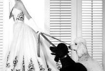 Dog and celebrities