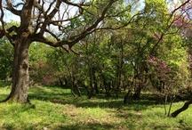La Necropoli del Puntone (5 km) / Un posto di grande spiritualità da visitare in stagioni diverse, per poter godere del mutare dei colori