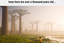 Verden - Madagaskar