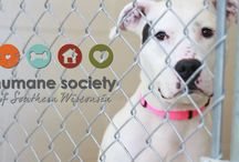 Mission - Who we are / Who and what the Humane Society of Southern Wisconsin stands for.