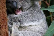 Travelling - Australia