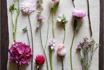 Beautiful Sights / by Melissa de Roa