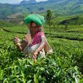 Kerala Travel / What to see and do in India's popular southern state of Kerala.