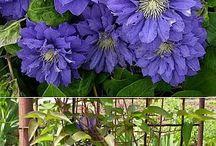 Садовые растения / О любимых цветах и кустарниках