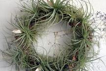 Wreath with air plants / Wianki z tillandsią