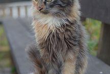 cats (kediler)