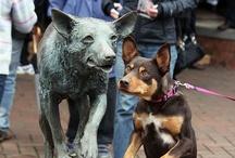 Kelpies & Dogs