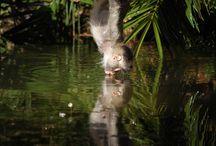 Marsupials / by Inbar