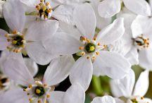 Botanicals / Plant life at it's finest. / by Julie Lane Collins