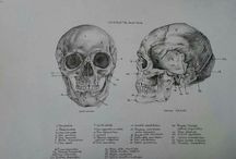 Anatomy Draw Human