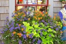 květiny - truhlíky