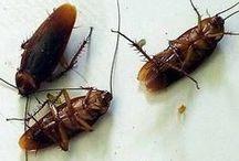 mata formigas