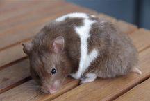 Hamsters Cia