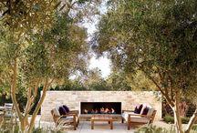 olive tree gardening