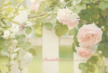 Florabella Collection / My ultimate favorite photos from Florabella Collection.