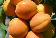 Φρούτα-βερύκοκο-νεκταρίνι-ροδάκινο