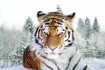 animales en vías de extinción