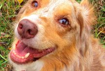 Curing Anxiety in Dogs