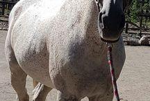 paarden lifestyle