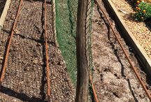 Blacks Smallholding - Veg Garden