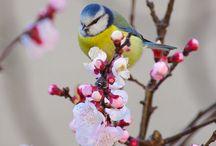 Primavera / primavera... Cosa è per te la Primavera partecipa al  nostro contest  Tutte le info su https://www.facebook.com/media/set/?set=a.684796734996329.1073741833.635231503286186&type=3&business_id=992177580840765