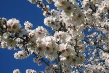 Spring Impressions / Spring at Castell Son Claret