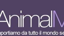 Animalmania / Collezione di articoli per animali, cani gatti e pappagalli, quando troviamo qualcosa di convincente, lo compriamo e lo mettiamo in mostra qui con qualche commento.