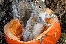 so cute - squirrels