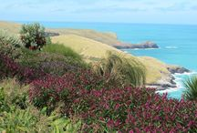 New Zealand Native Plantings