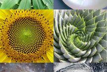 Natural fractals compilation