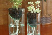 plant holder glass