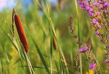 Łąki,pola