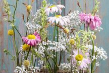 Flower . plant