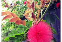 Flowers / by Samantha Clark