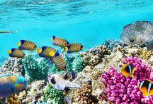 akvaria ryby