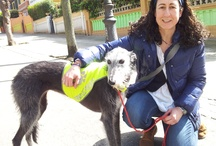 Annie, una galga de terapia / https://www.facebook.com/media/set/?set=a.10151501845998101.1073741840.61355933100&type=1