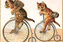 cats & dogs pets animaux de compagnie
