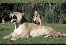 Krásne zvieratká