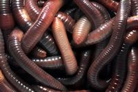 Learn: ZOOLOGY - Worms