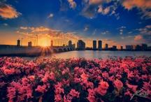 Florida / by Stephanie Averhart