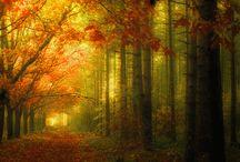 I miss Autumn...