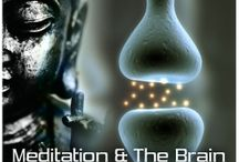 MEDITATAION AND THE BRAIN