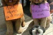 σκυλακια και σκύλοι