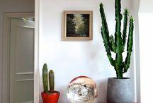 plantas interior decorativas!!❤