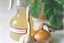 natural pest repellents