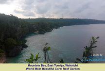 http://beautifulindonesia.social/travelling-to-wakatobi-islands-a-mini-archipleago/