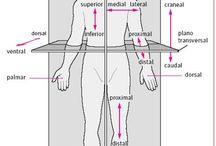 Anatomía y Fisiología I