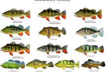 Pesca / Fotos e informacoes