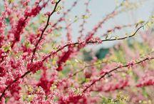 Joyful Pink