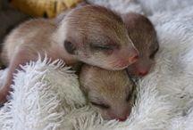 Meerkat baby's / Wildlife